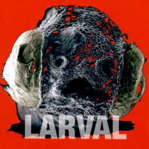 Bill Brovold - Larval